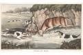 Jelen lov,Alken H.,akvatinta, 1823
