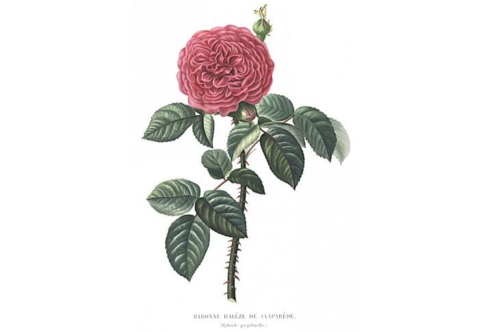 Baronne Haleze, Bricogne, kolor. akvatinta, 1846