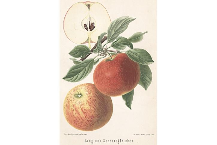 Jablko, chromolitografie, Degenkolb1894