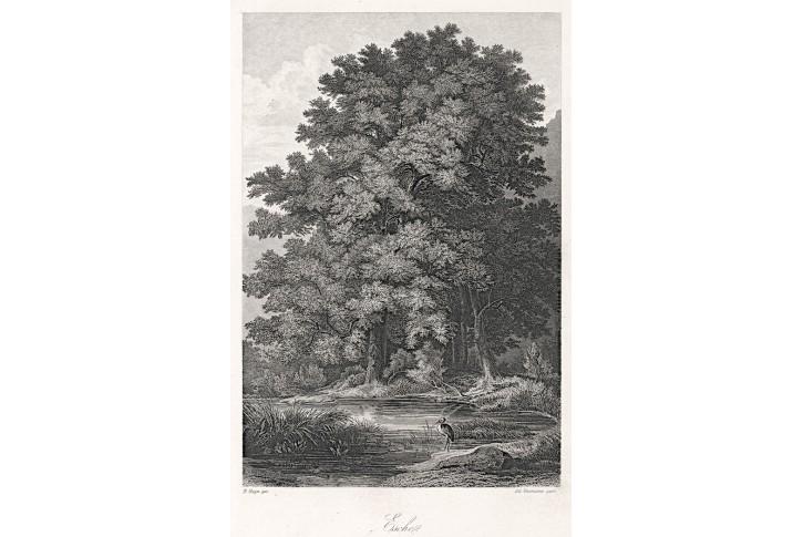 Jasan, Rossmässler, oceloryt, 1863