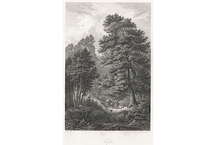 Borovice, Rossmässler, oceloryt, 1863