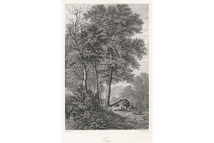 Osika, Rossmässler, oceloryt, 1863