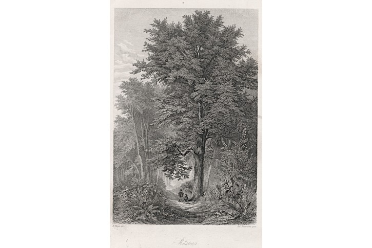 Jilm, Rossmässler, oceloryt, 1863