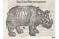 Nosorožec D. Kandel, podle Dürera, dřevořez, 1560