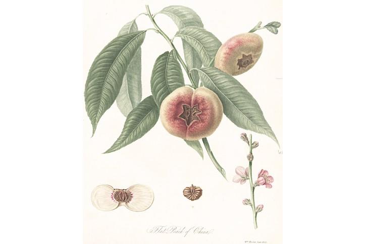 broskev, akvatinta, 1822