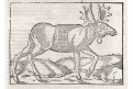 Los, S. Münster, dřevořez, (1590)