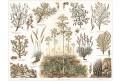 Stepní rostliny, chromolitografie, 1902