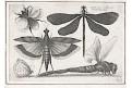 Hollar V.: Vážky a čmeláci, mědiryt, 1646