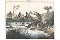 Hon lov na jelena , Neue ..kolor.litografie , 1837