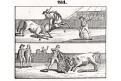Býčí zápasy, litografie, 1832