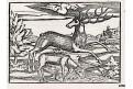 Jelen, dřevořez, Münster, (1580)